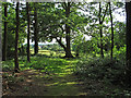 TL7317 : The edge of Sandylay Wood by Roger Jones