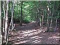 TL7317 : Path in Moat Wood by Roger Jones