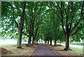 TQ1779 : Avenue of trees, Lammas Park by N Chadwick