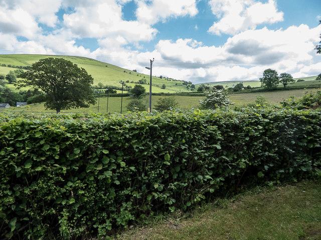 Hedgerow, Rhulen, Powys