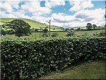SO1349 : Hedgerow, Rhulen, Powys by Christine Matthews