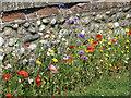 TG0743 : Wildflower border by Pauline E