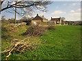 ST4701 : Brushwood, Beaminster by Derek Harper