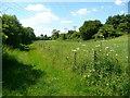 TL2027 : Footpath alongside Ash Brook by Humphrey Bolton