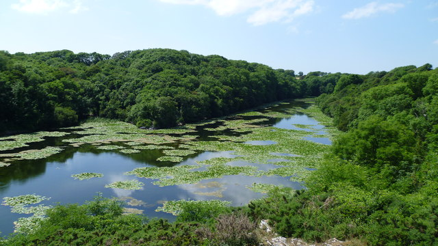 Looking down on Bosherston lily ponds in June