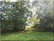 TQ2688 : Glade by Lyttleton Playing Fields by David Howard