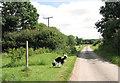 TM2390 : Fingerpost on Shelton Common by Evelyn Simak