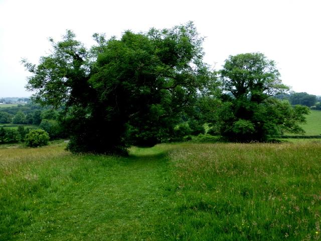 Holy tree, Navan Fort