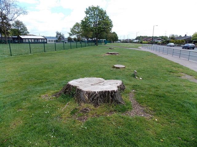 Stumps at the edge of Mill Lane, Caldicot