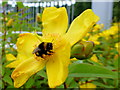 H4572 : Busy bee, Omagh by Kenneth  Allen