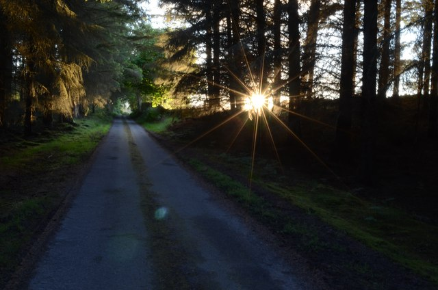 Evening Sun on the Driveway to Uppat