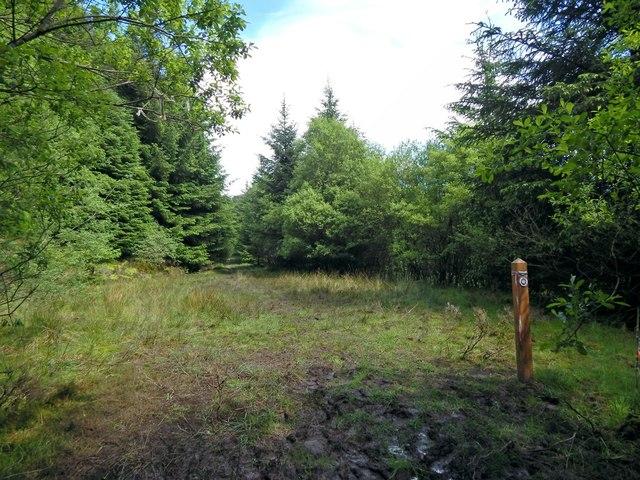 Start of forestry track