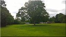 TQ1169 : Sunbury Court Grounds by James Emmans