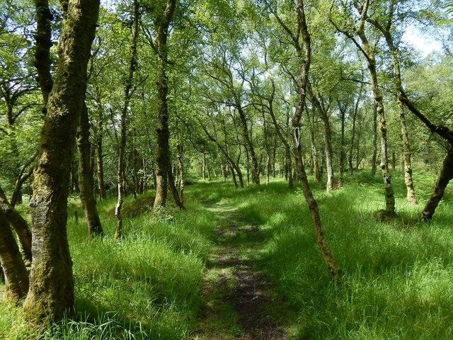 Path through Quarry Wood