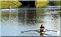 J3371 : Rowing, River Lagan, Stranmillis, Belfast (June 2014) by Albert Bridge
