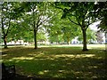 SK5903 : Green by New Walk, Leicester by Paul Gillett