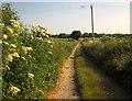 SU1229 : Foxmore Drove by Derek Harper