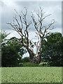 TM3360 : Dead Tree by Keith Evans