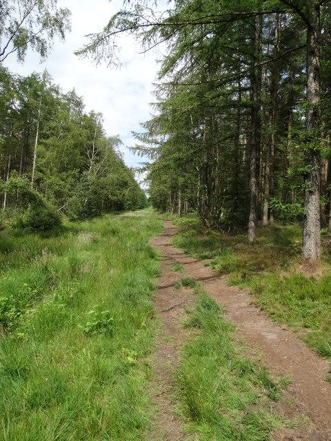 Bottom Moor Track