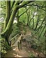 SX5084 : Path at Lydford Gorge by Derek Harper