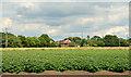 SE8418 : Potato field near Garthorpe by Trevor Littlewood