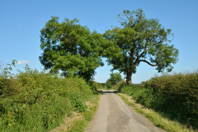 Two trees on Blind Lane
