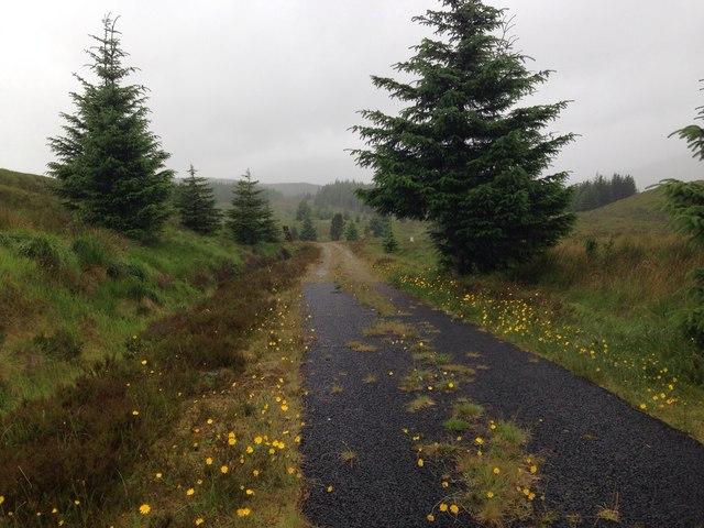 Forestry road near Loch Loyne