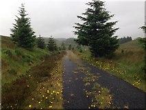 NH1804 : Forestry road near Loch Loyne by Steven Brown