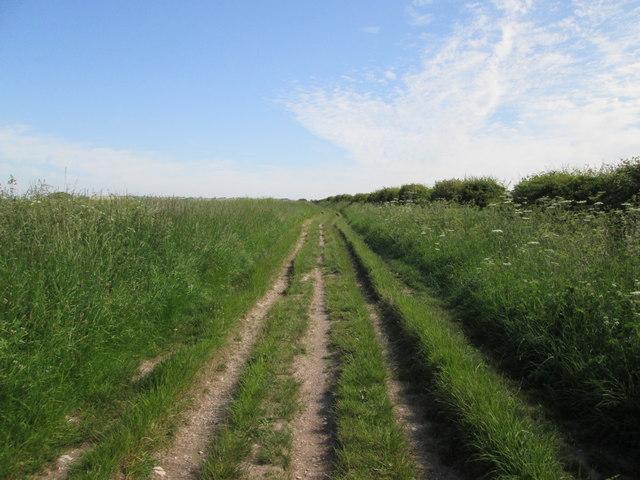 The  Ridgeway  heading  north  to  Overton  Down