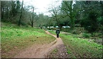 SX8963 : Footpath from Cockington Court by Clint Mann
