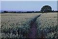 SK4537 : Path to Risley Lodge Farm by David Lally