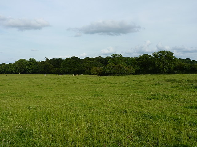 Across fields to Stretton Wood