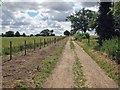 TL4950 : On Rowley Lane in July by John Sutton