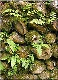 TQ0950 : Vegetation on a flint cobble wall, Briary Hill by Stefan Czapski