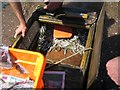 SX9372 : Sand eels in a submersible box, back beach, Teignmouth by Robin Stott