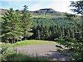 NG3823 : Glen Brittle Forest by Richard Dorrell