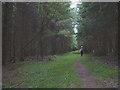 NY5524 : Bridleway in Melkinthorpe Wood by Karl and Ali
