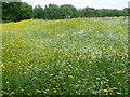 TQ2886 : Wildflower meadow at Parliament Hill Fields by Marathon