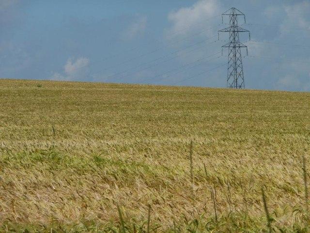 Pylon above a field of barley