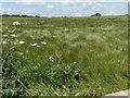 SU6327 : Windswept hayfield, east of Slys Farm by Christine Johnstone
