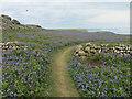 SM7209 : Path on Skomer Island by Hugh Venables