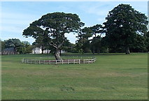 SX9063 : Fence around a tree in Torre Abbey Meadows, Torquay by Jaggery