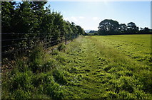 SX5756 : Sparkwell Footpath No4 by jeff collins