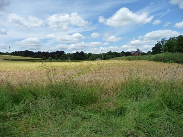 Barley field west of Floud Lane