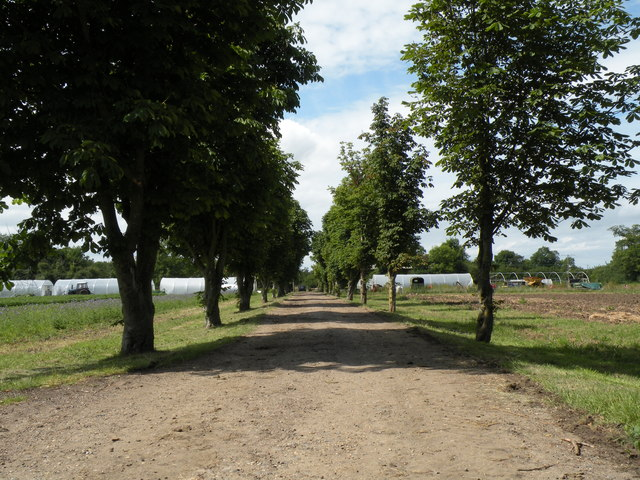 The approach to Maple Farm