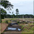 SK8658 : Clear felled area in Stapleford Wood by David Lally