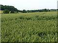 SU5423 : Tractor tracks in a wheatfield by Christine Johnstone