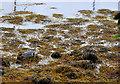 NM8104 : Heron in the seaweed by Stuart Wilding