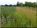 TL2578 : Footpath to Raveley Wood Farm near Abbots Ripton by Richard Humphrey