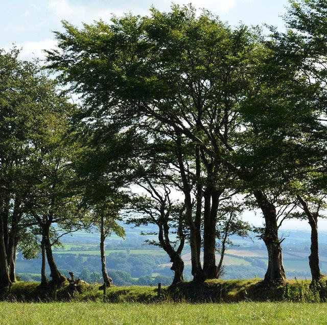 Tree line, West Anstey, Devon